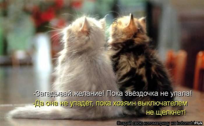 Реальные мистические истории, которые произошли с людьми в их жизни. Поразительная история про говорящих кошек.